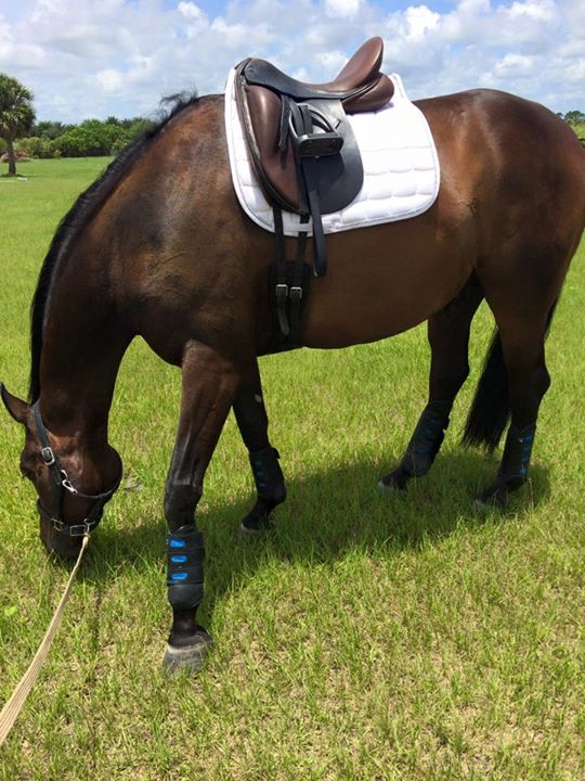 Equine Boot Review