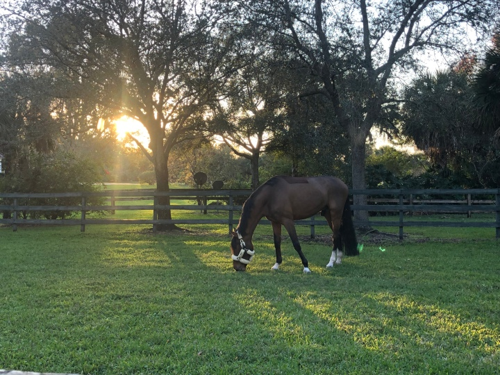 Hiccups, hurdles &horses